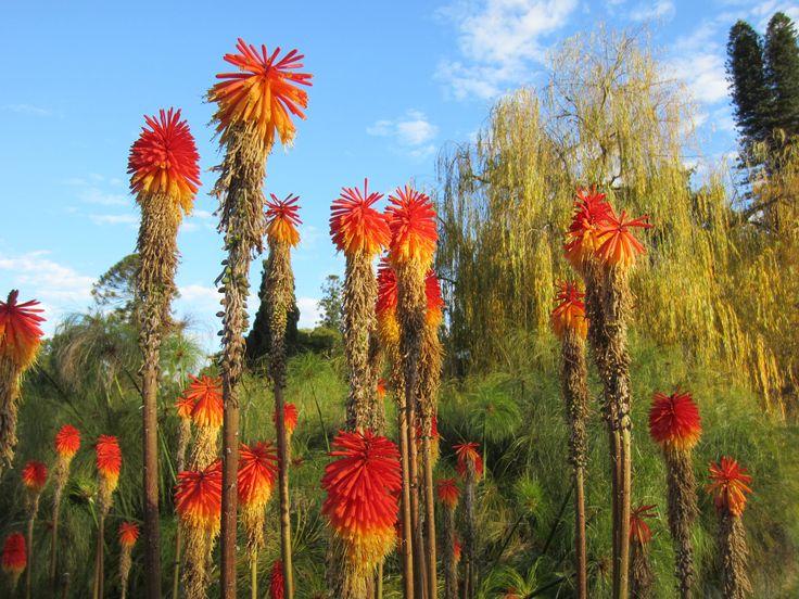 Botanic Gardens, City of Adelaide, SA, July 2013.