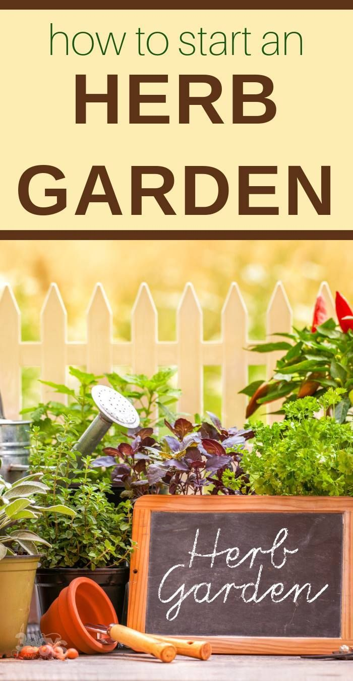 Knowing What To Plant Makes Creating An Easy Herb Garden For