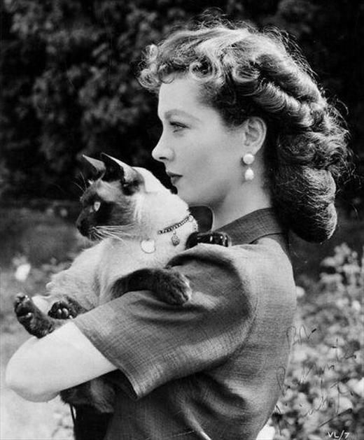 """Vivien Leigh and her Siamese cat, New Boy (New for short) The cat was """"a gift from her husband [Laurence Olivier] in 1946 and was named after London's New Theatre (now the Noel Coward Theatre in St Martin's Lane) where Olivier frequently performed. New was one of her favourite cats and would regularly travel with the couple to the theatre as a good luck charm and would stay in their dressing rooms."""""""