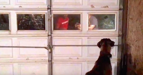 Este perro gran danés se reencuentra con su dueño dos años después de haber desaparecido