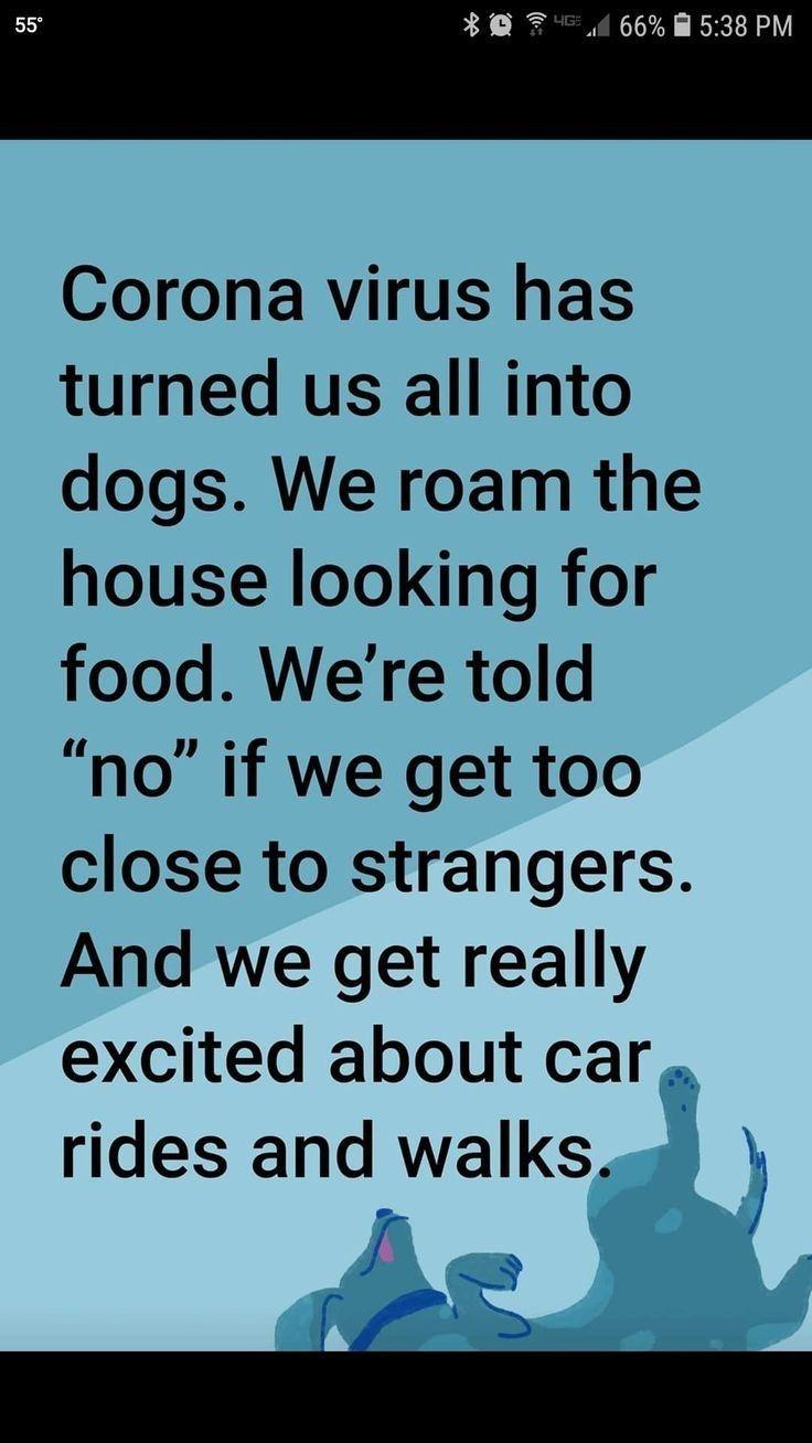 Pin By Allison Chem On Corona 2020 Funny Quotes Funny Jokes Haha Funny