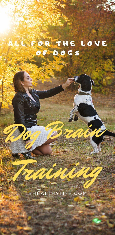 Brain Training For Dogs Review Brain Training Dog Training Tips