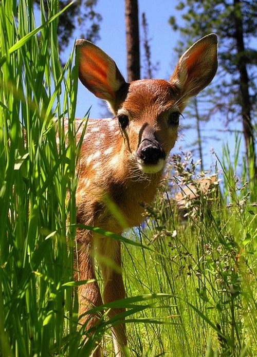 This is gorgeous - the colours are so vibrant - and I love deer, especially fawns - they are such beautiful animals!
