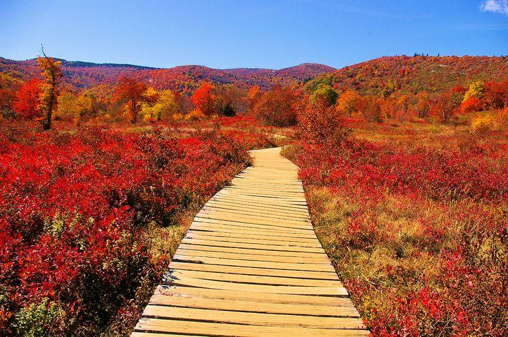 Fall Hike at Graveyard Fields along the Blue Ridge Parkway south of Asheville, North Carolina