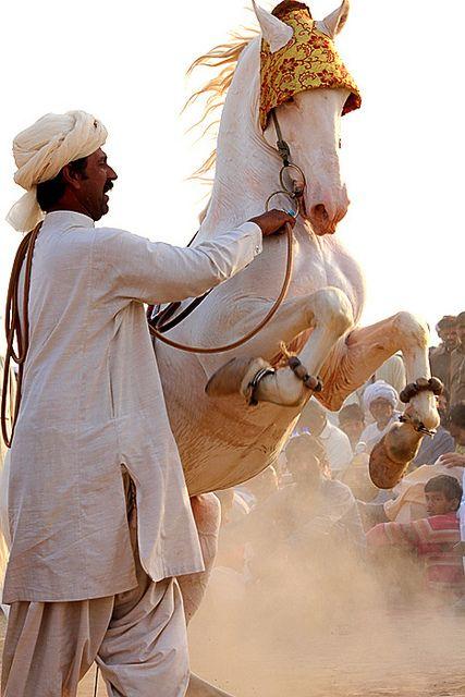 Dancing Horse by S M JOYIA, via Flickr
