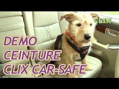 Harnais de sécurité voiture pour chien : Clix Car Safe - YouTube