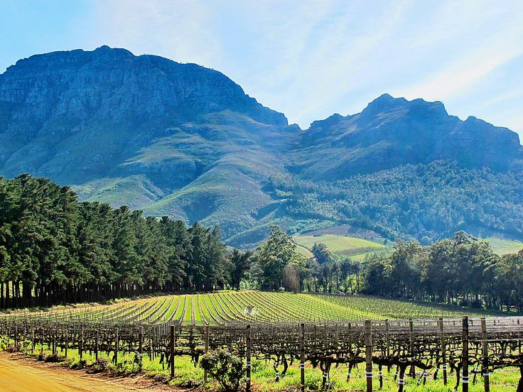 Wine lovers and foodies; Stellenbosch is the wine and gourmet capital of South Africa. Nestled between tall mountains, the beautiful town is characterised by oak-lined streets and classic Cape Dutch buildings. Which is your favourite tour featuring Stellenbosch? Book online, Skype or call us toll-free to arrange a luxury stay >>