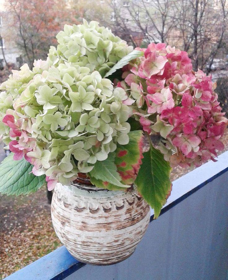 Na dobranoc taki bukiet.Jeszcze piękne hortensje się ostały.#dobranoc #bukiet #hortensje #kolory #flakon #goodnight #bouquet #hydrangea #colors #vasa #добройночи #букет #гортензия #цвета #флакон #балкон