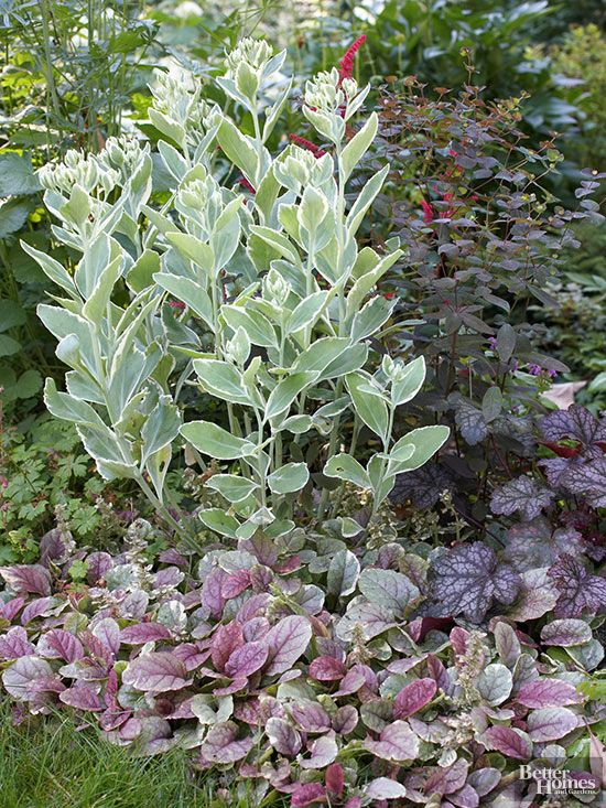 17 best images about gardening perennials on pinterest for Perennial plant combination ideas