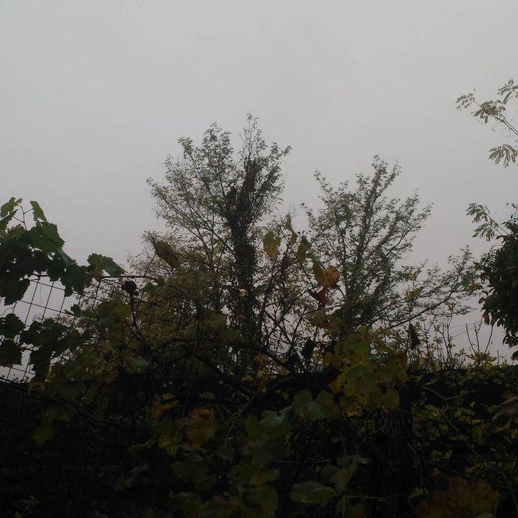 3 #novembre 2017 #day3L' #essenziale è #invisibile agli occhi..  E questo mi ricorda che è meglio cambiare orario per la foto dato che da ora a primavera ogni mattina sarà così..   #montegragno #giornodopogiorno #daybyday #natura #naturelover #toscana #tuscany #italia#italy #naturallife #naturelover #firstpostoftheday #phoneography #nebbia