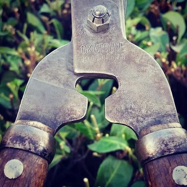 """Okatsune shears are made from Izumo Yasugi steel, which is traditionally being used for Katana swords used by the Samurai 🇯🇵 #japanese #tools #shears #quality #pruning #gardening #handtools #japanesegarden #steel #traditional #hedgeclippers #topiary RepostBy @hultmale: """"It's a constant """"battle"""". #japanesesteel #okatsune #januaryspring #laurelhedge"""""""