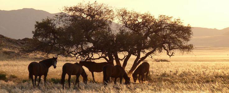 Namibia: Wanderung in Aus