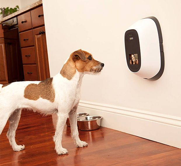 A pet-cam that lets you video chat with your pet when you're at work. You can also set it up to give him a treat! <3 it!!