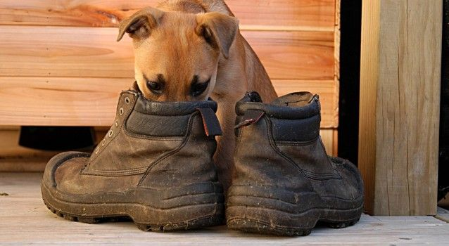 Τι να κάνετε για να μη μυρίζουν τα παπούτσια σας