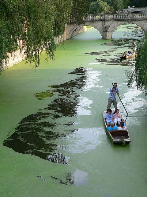 Boating on river Cam in Cambridge, England (by j_a_clarke77)