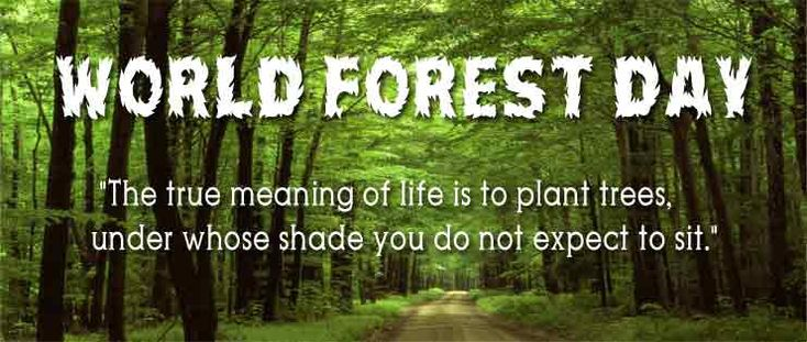 Save the forest, love it, protect it and don't get haters represent it. This International Forest Day let's take a pledge to save the trees and save the earth. #InternationalForestDay
