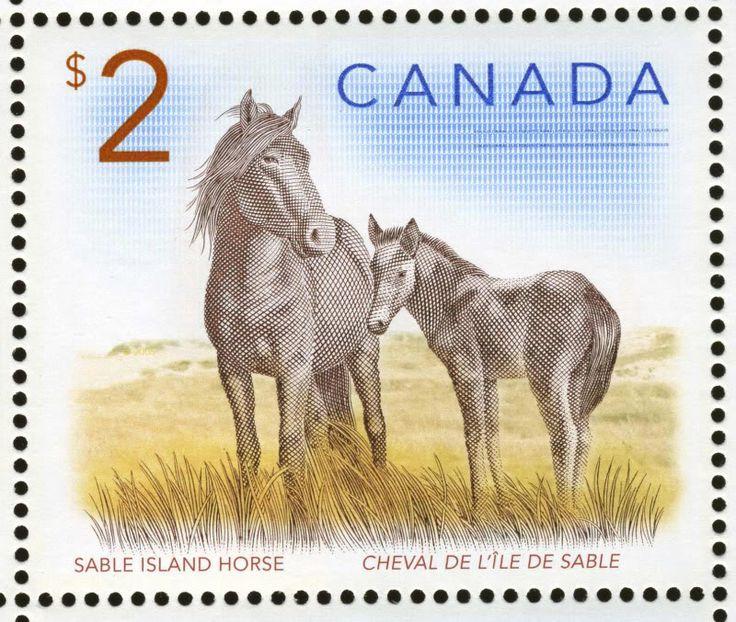 Sable Island horse, Canada