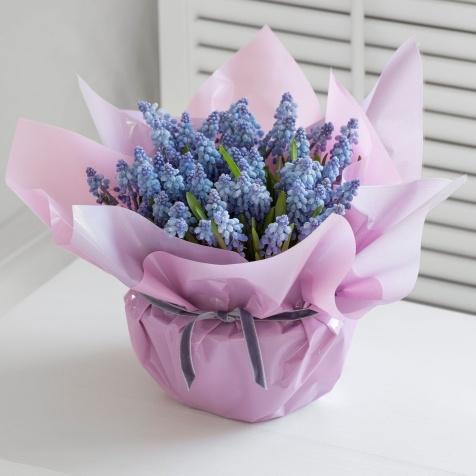 """Gift Wrapped Muscari~/ blauwe druifjes in een lege glazenpot, wat water ( uiteraard) én daarna met een leuk stevig papiertje versierd.( lintje erom en """"klaar""""om weg te geven!)"""