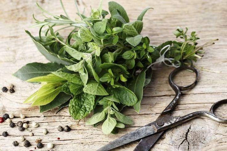 Διουρητικά βότανα για κατακράτηση υγρών