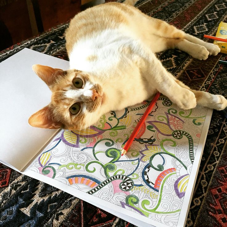Is this only for humans? I also want to doodle and colour in!