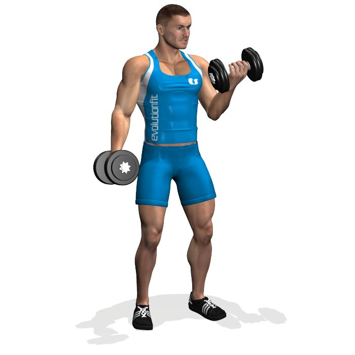 Standing dumbbell alternate biceps curl is a great exercise to develop the strength and the mass of biceps. This multi-joint exercise involves the whole biceps, furthermore the brachioradialis biceps and forearms. The deltoids take part in the movement.