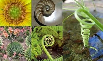 PHI …Aranymetszés...Da Vinci... Fibonacci-számok... ötszög.