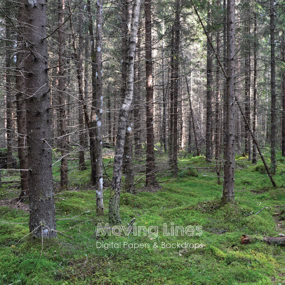 Forest Photo Background Trees Desktop Wallpaper By MovingLines