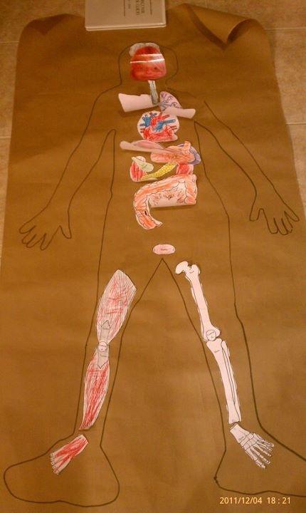 Idea excelente para enseñar y practicar los órganos internos en la clase de…
