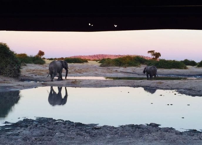 This beautiful photo of Chobe elephants with a stunning setting is an entry to our photo competition | Category: On safari, Photographer: Rosa Deulofeu, Photo captured on safari at Chobe Safari Lodge | Find out more: http://underonebotswanasky.com/photo-contest.php | #TheMagicOfBotswana #PhotoCompetition #MagicOfBotsPhotoCompetition