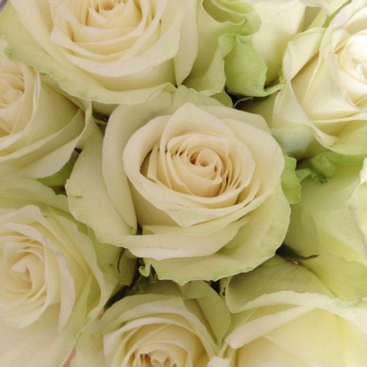 Image result for hvite roser