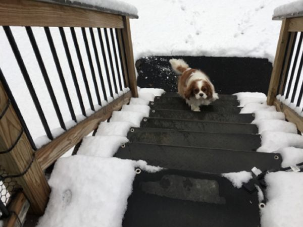 Snow Melting Heated Floor Mats for your home or business. No more shoveling, salting or slipping. Use heated walkway, floor and stair mats this winter.