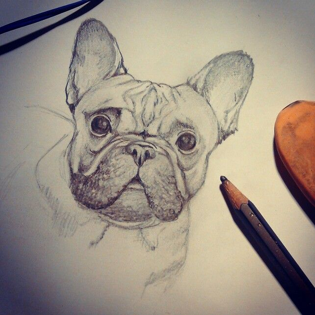 Drawing frenchie