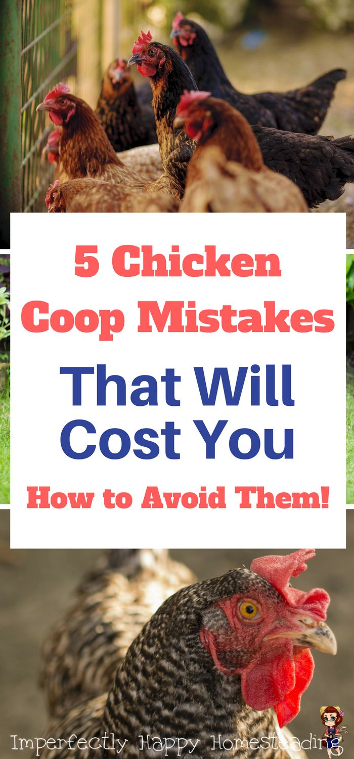5 Chicken Coop Mistakes That Will Cost You & How to Avoid Them. Backyard chickens, free range chickens and cage free.