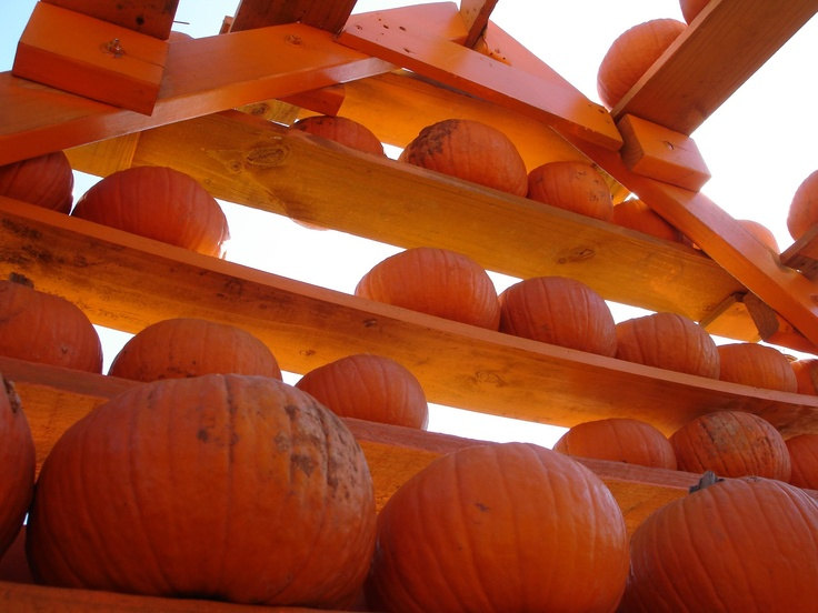 Flower Mound, Texas Pumpkin Patch