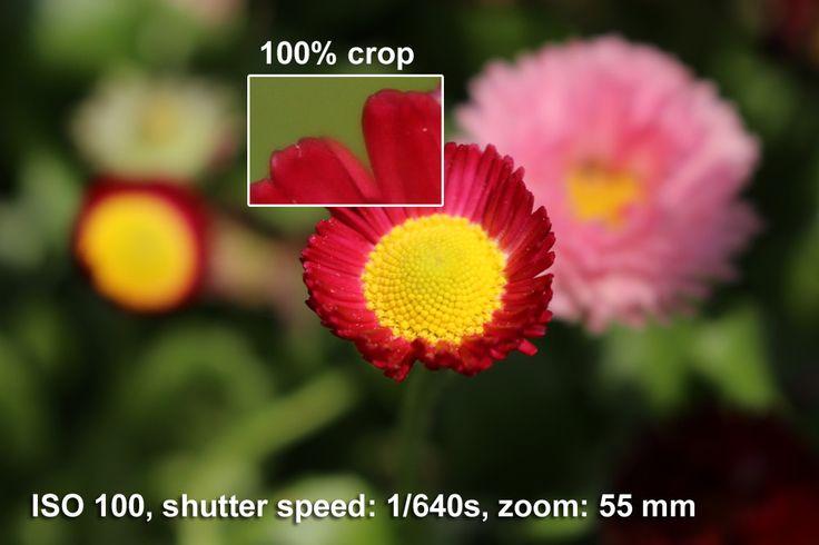 Canon EOS Rebel SL1 18-55mm IS STM Sample Images