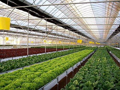 16 Best Images About Hydroponic Greenhouse Systems On