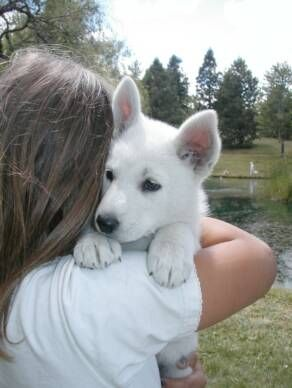 This is the only thing I want EVER! White German Shepard