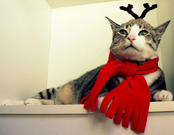 2017 Christmas outfits for cats. Christmas is just around the corner, and as much as you like to dress up for it, so do your pets! Your cats deserve to look cute and have their own Christmas outfits.