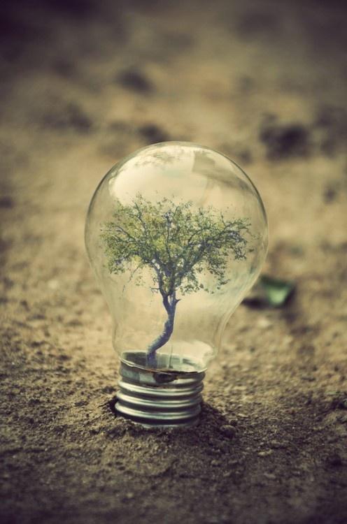 Trees are a bright idea.