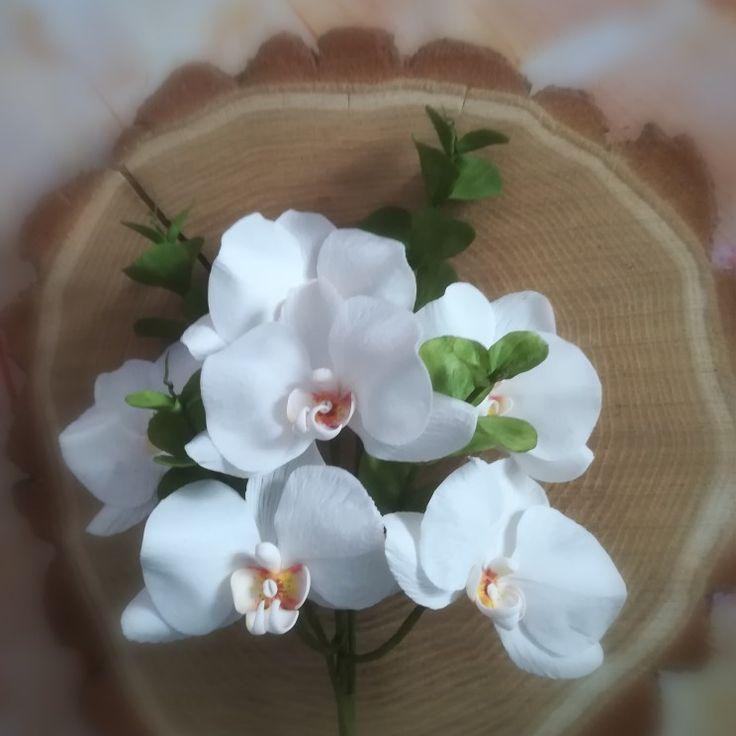 Sugar orchidea