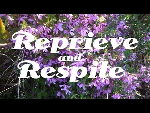 Reprieve and Respite | Chronic Aches | Pain | Relief | Isochronic Tones | CALM Space Healing=>