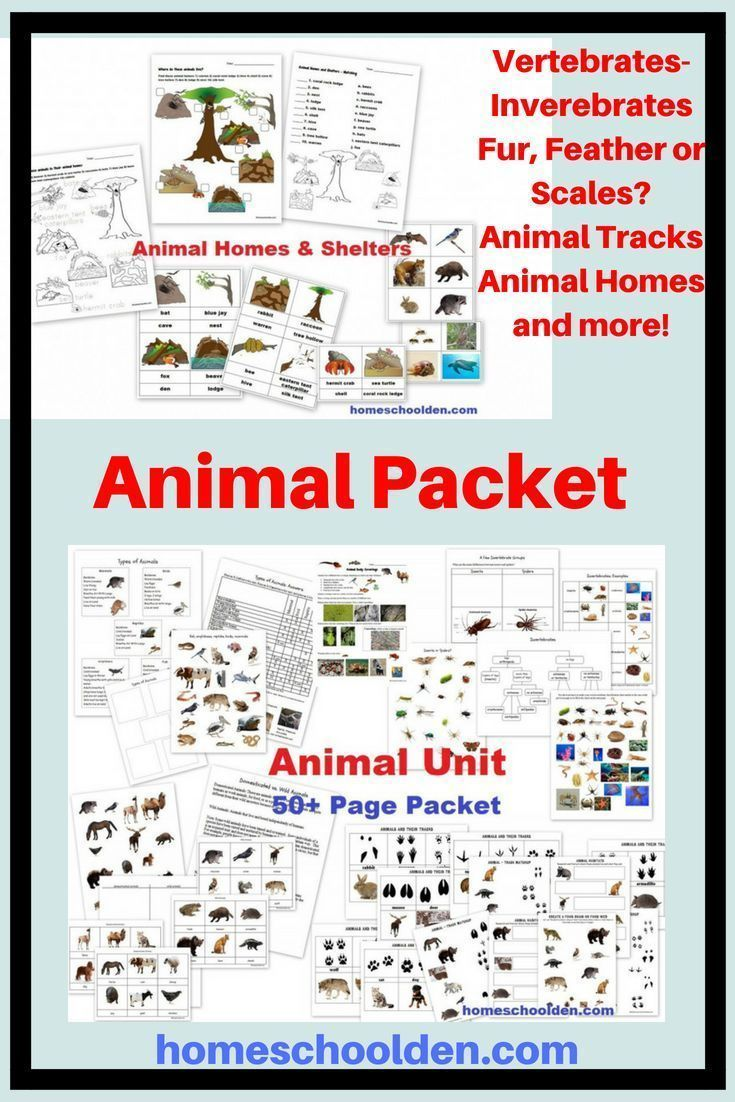 Animal Unit Vertebrate Invertebrate Animals Worksheet Packet 100 Pages Animal Tracks All About Animals Vertebrates