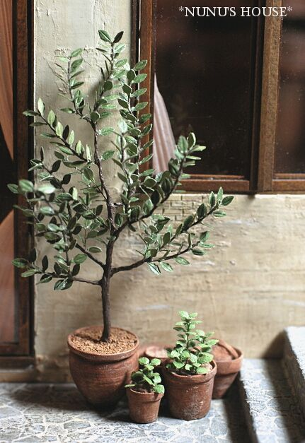 2011/10/26//Wed. *オリーブの木*An olive tree
