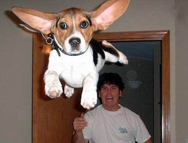 Flying-dog