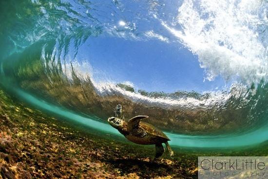 Turtles: The Mars, Oahu Hawaii, Beautiful, Clarks, Underwater Photography, Ocean Photography, Dance Honu, The Waves, Sea Turtles
