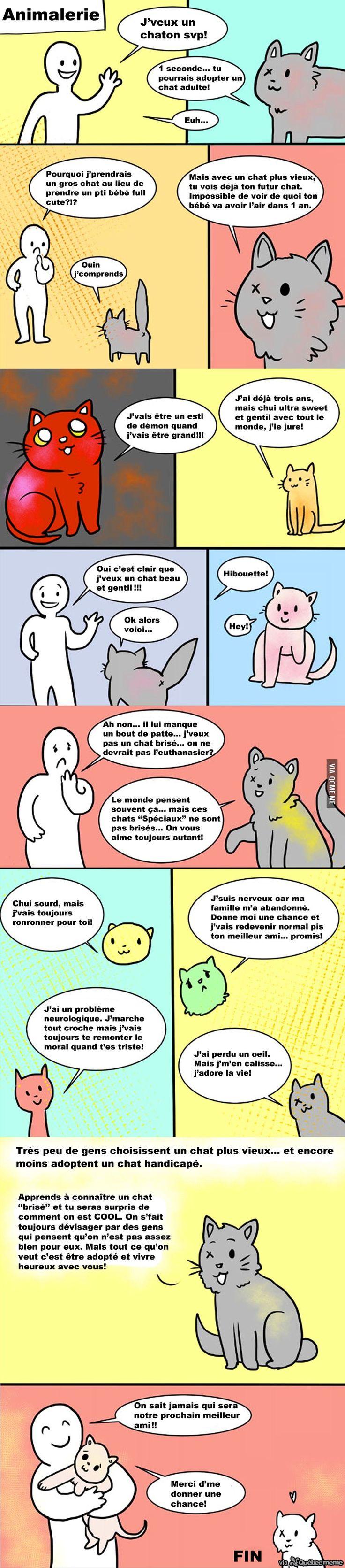 Tout le monde doit lire CECI avant d'adopter un chat. Je confirme. Que du bonheur