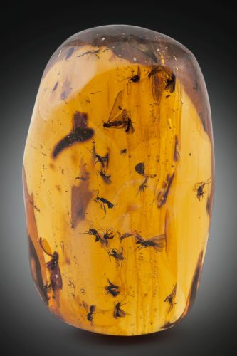Prehistoric Amber with winged ants and winged termites