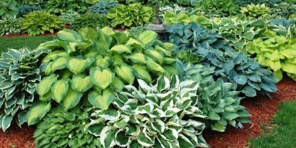 5196 besten gartengestaltung garten und landschaftsbau for Balkonpflanzen fur halbschatten