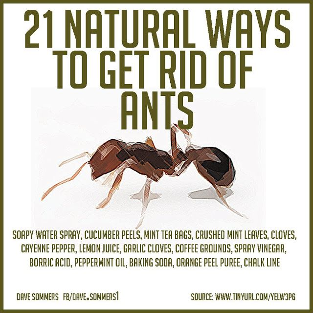 Natural Ways To Get Rid Of Ants In My House