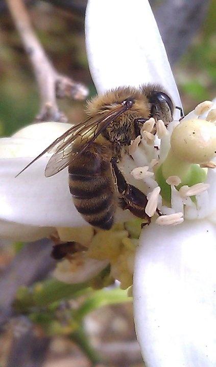 Macro of a bee